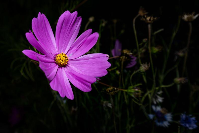 Christine-Bédard -exposition fleur
