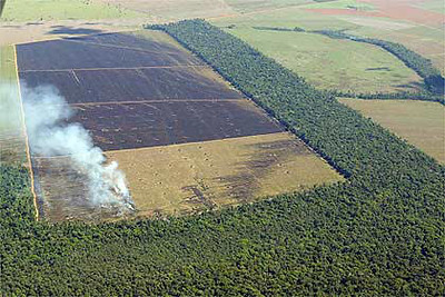 Deforestation in the Amazon.