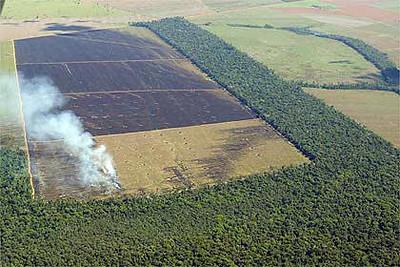 Deforestation in the Amazon.
