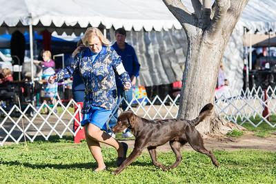 Del Sur Kennel Club Ring 5 2019