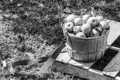 Fischers' Farm More Apples