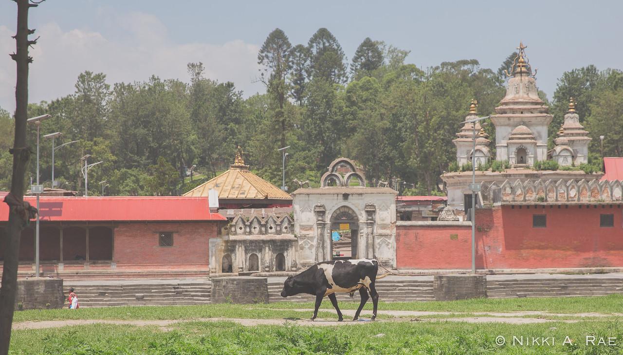 Kathmandu 06 01 2017-27