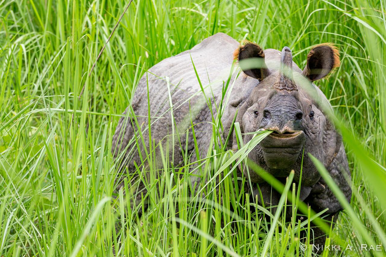 Chitwan Safari Intrepid 05 29 2017-52