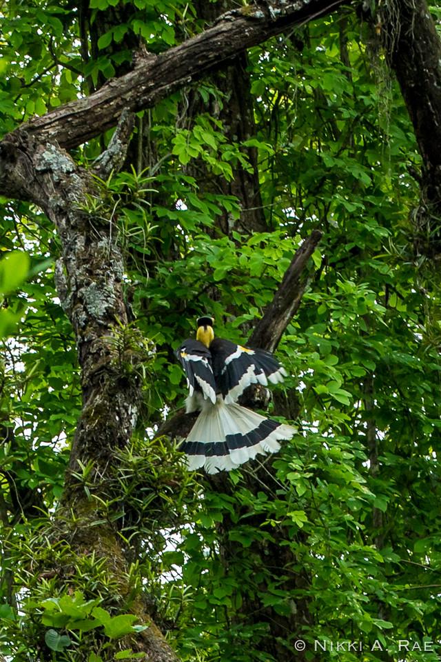 Chitwan Safari Intrepid 05 29 2017-42