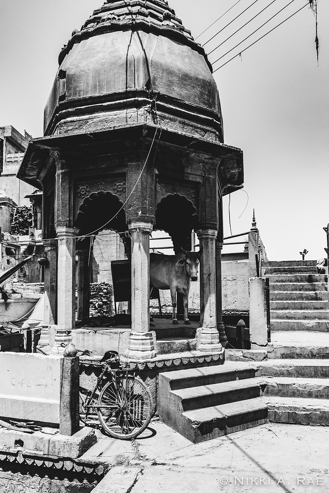 Varanasi Intrepid May 2017-216
