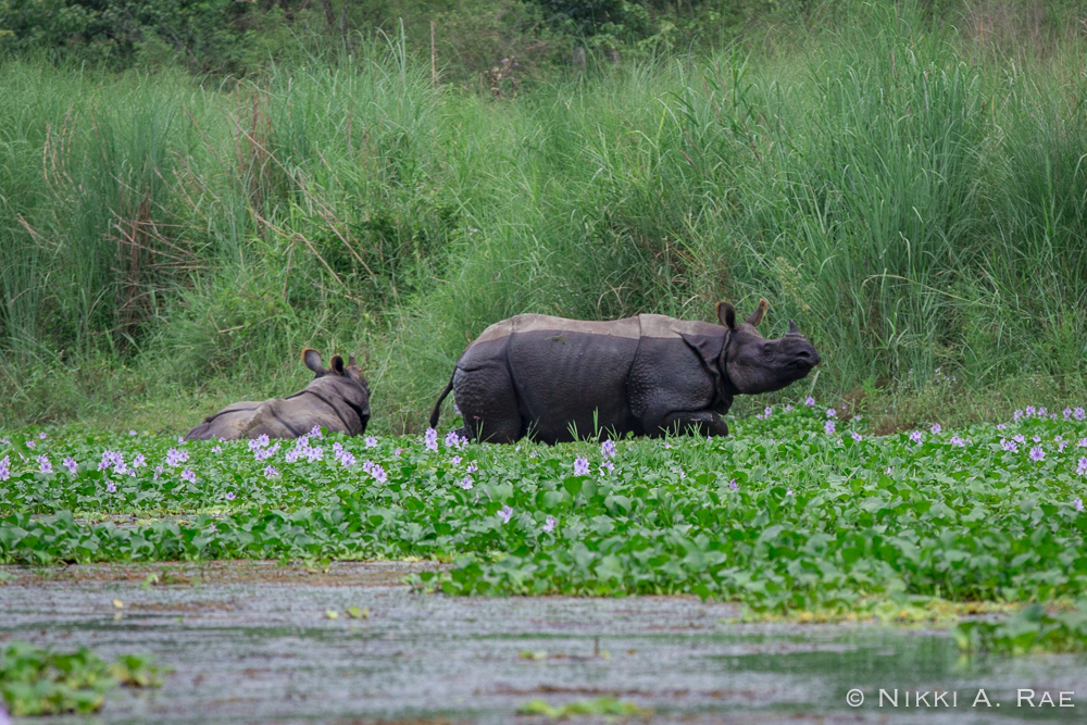 Chitwan Safari Intrepid 05 29 2017-24