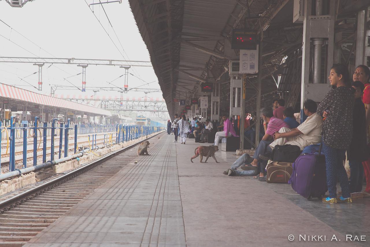 Agra Intrepid 05 20 2017-55