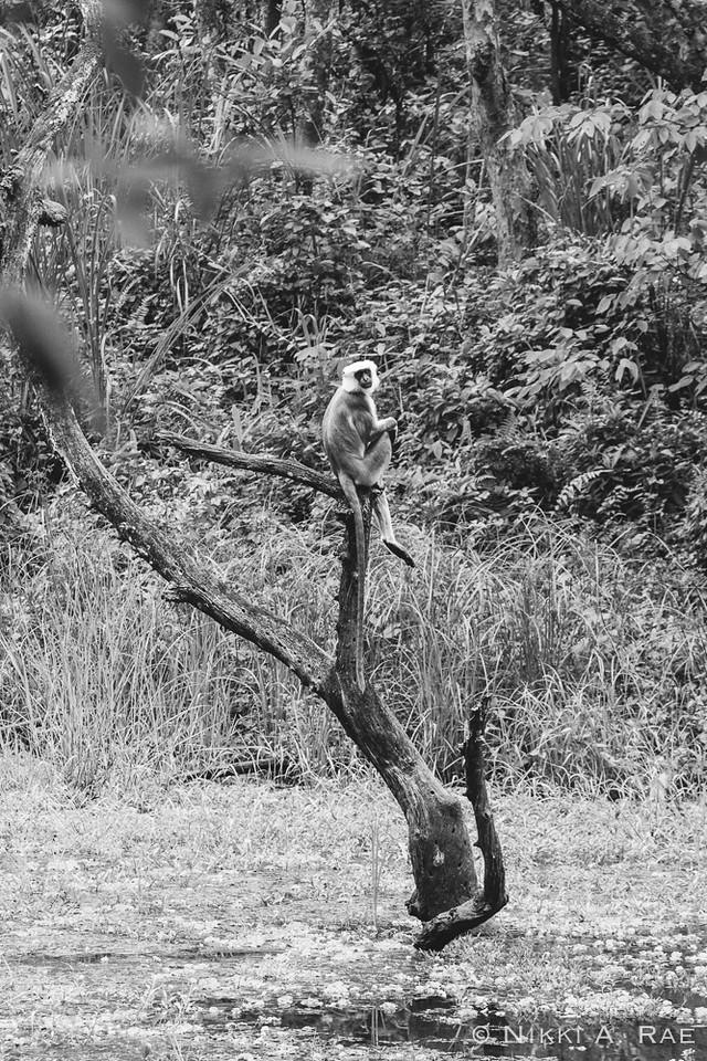 Chitwan Safari Intrepid 05 29 2017-34
