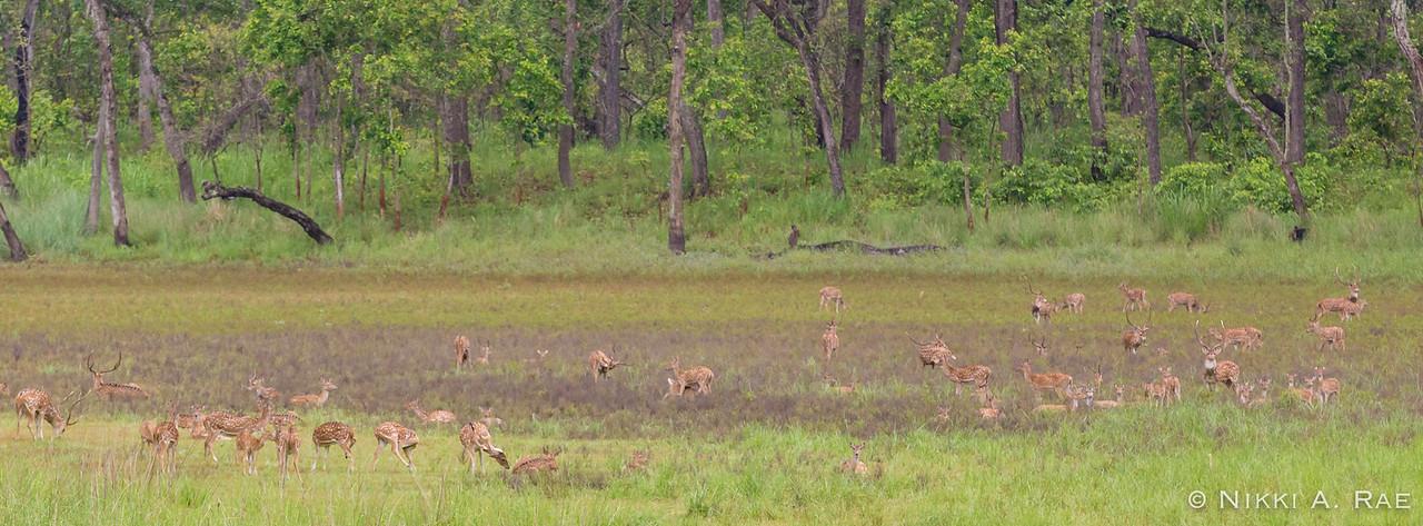 Chitwan Safari Intrepid 05 29 2017-62