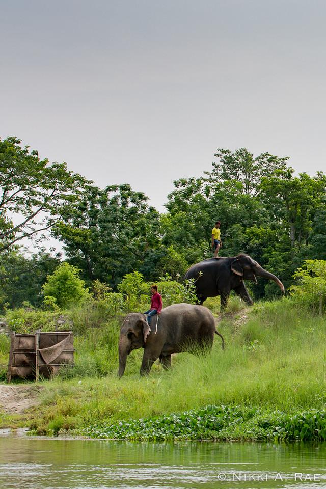 Chitwan Safari Intrepid 05 29 2017-2