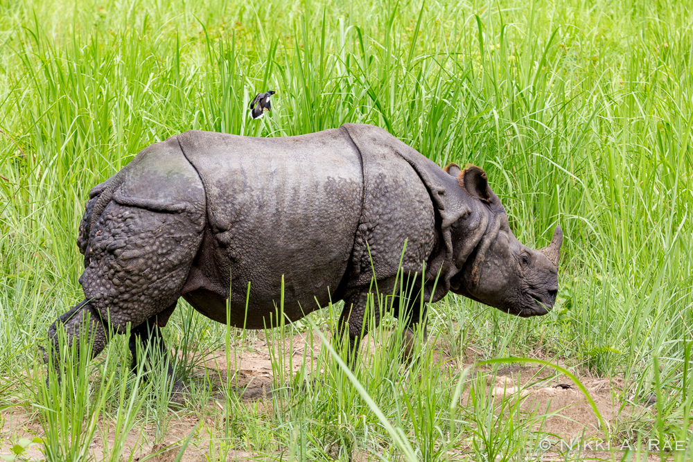 Chitwan Safari Intrepid 05 29 2017-48