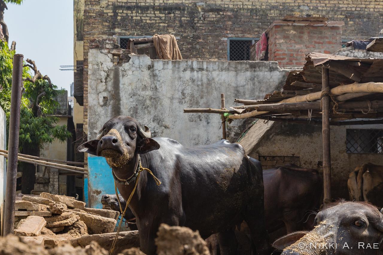 Varanasi Intrepid May 2017-52