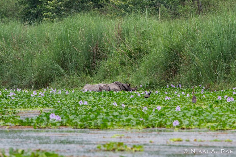 Chitwan Safari Intrepid 05 29 2017-18