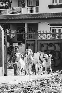 Kathmandu 06 01 2017-84
