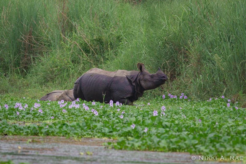 Chitwan Safari Intrepid 05 29 2017-22