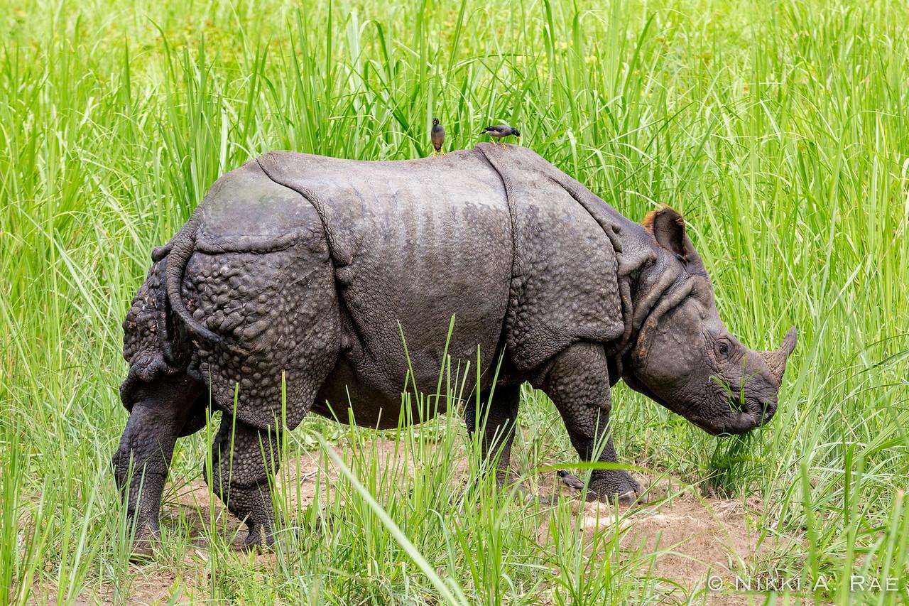 Chitwan Safari Intrepid 05 29 2017-50
