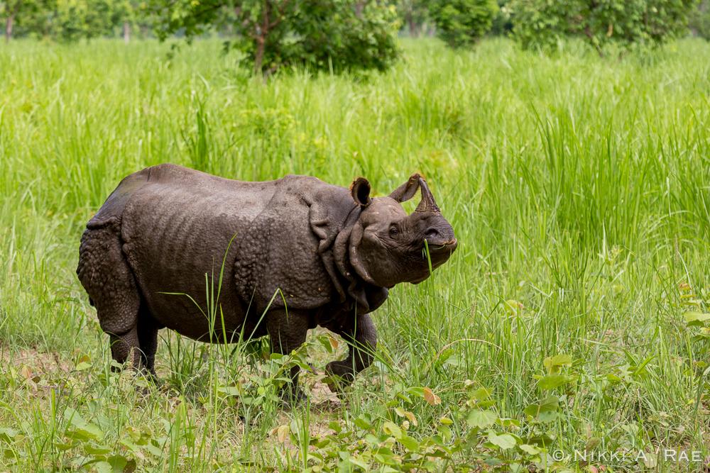 Chitwan Safari Intrepid 05 29 2017-45