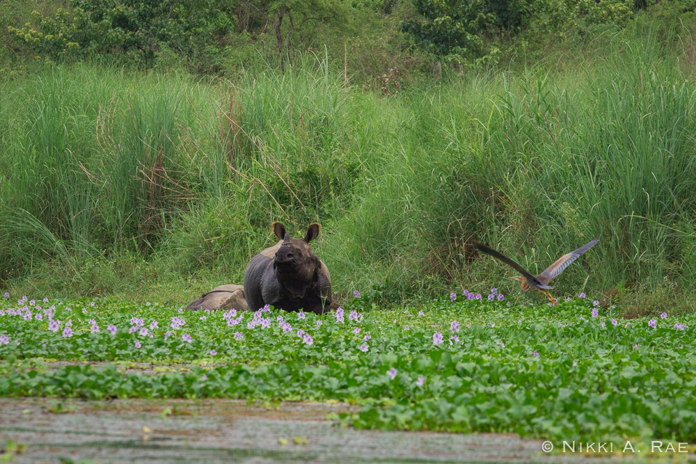 Chitwan Safari Intrepid 05 29 2017-20