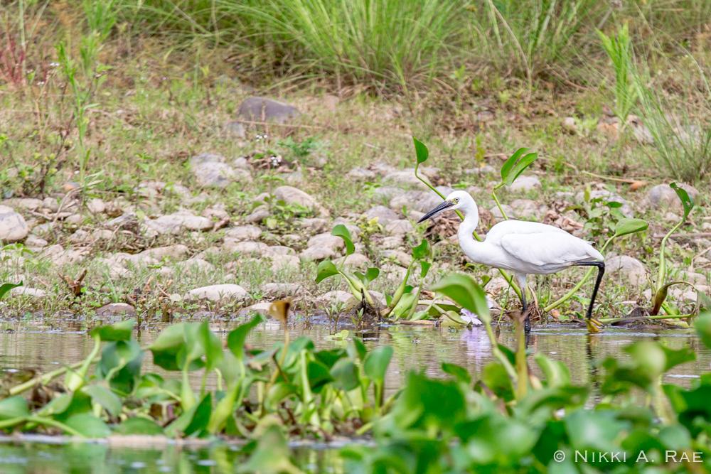 Chitwan Safari Intrepid 05 29 2017-5