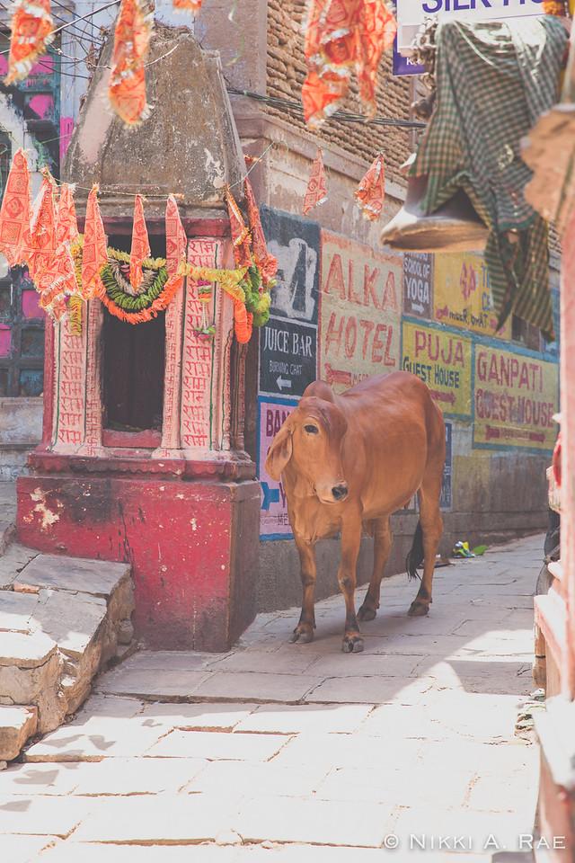 Varanasi Intrepid May 2017-217