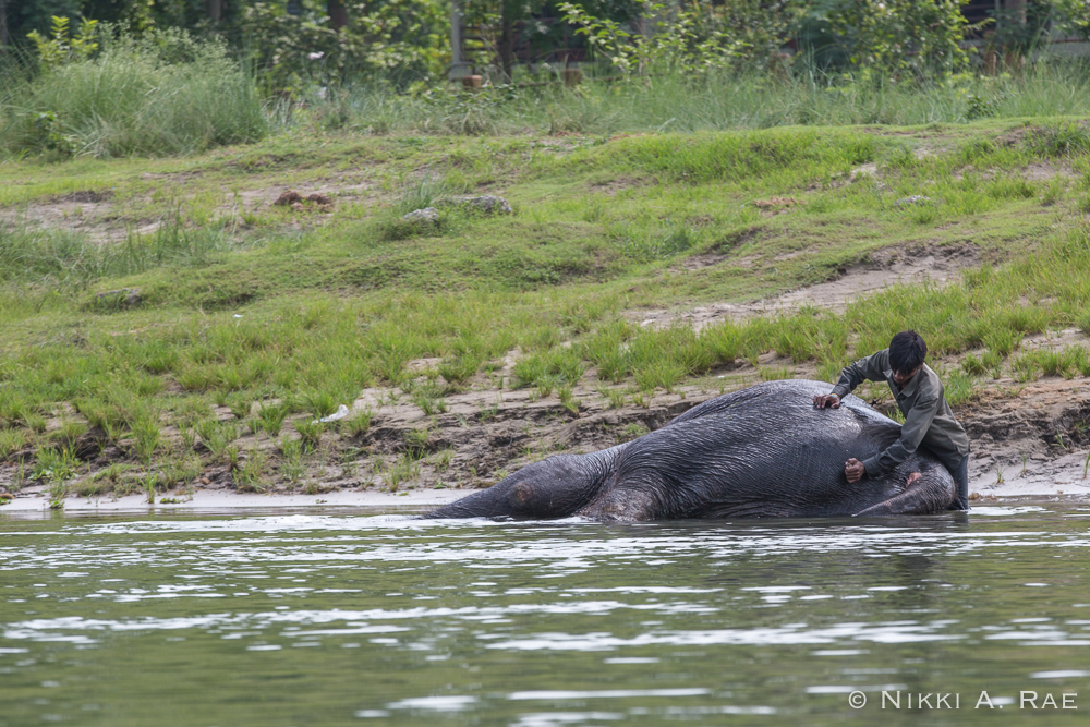 Chitwan Safari Intrepid 05 29 2017-4