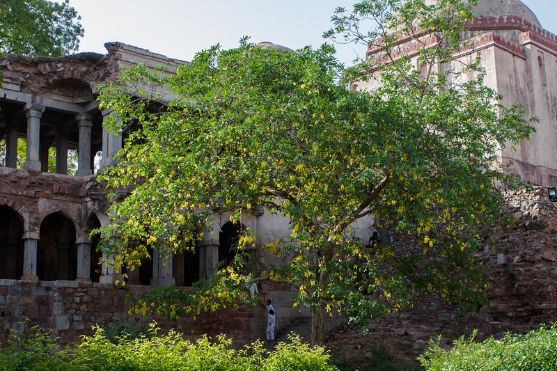 Hauz Khas garden, Delhi