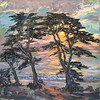 CA-245 Carmel Sunset Cypress