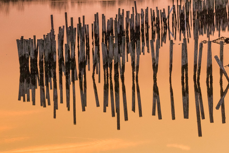 Sticks, Blackwater NWR