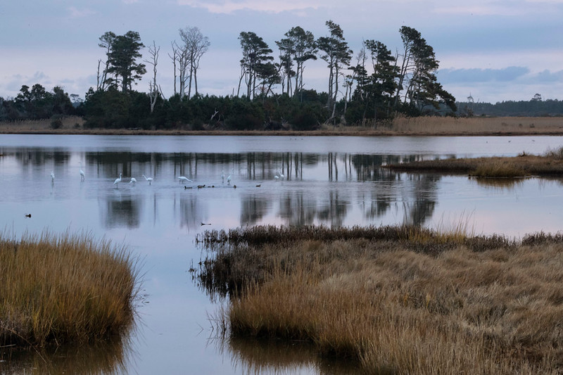 Black Duck Pond, Chincoteague NWR