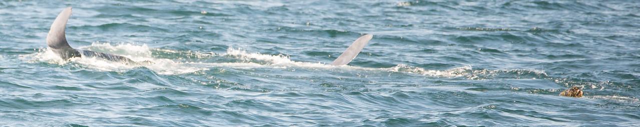 Delta Blue Whale 10092016
