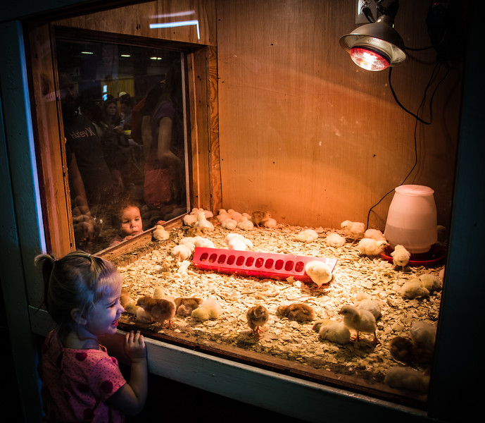 Looks of pure joy and wonderment on children's faces as they look at these sweet baby chicks, while immediately outside the exhibit, chickens are being cooked and eaten. Children inherently love animals and most would be devasted to learn what will become of these babies.