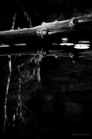 ..reflektera... (Den omfamnande skogen)