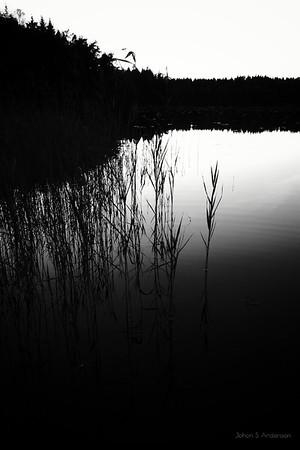 ..dunkel... (Den omfamnande skogen)