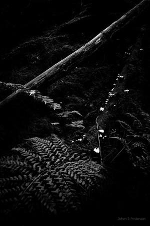 ..träda... (Den omfamnande skogen)