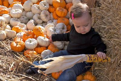 Denai - 11 Months - Pumpkin Farm