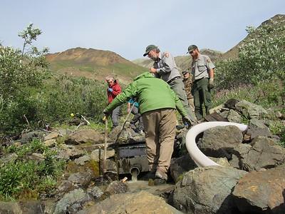 Wilderness Volunteers: 2017 Denali National Park (Alaska)