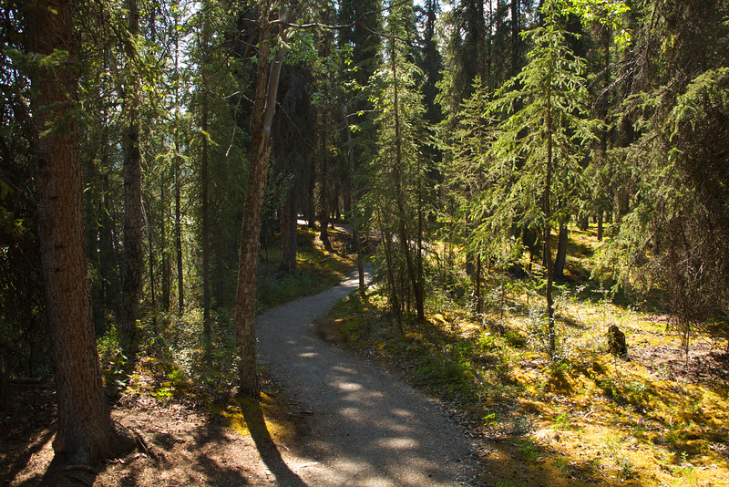 The trail between the two Riley Creek bridges.