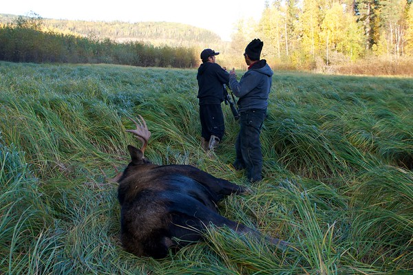 Successful moose hunt along Beaver River.