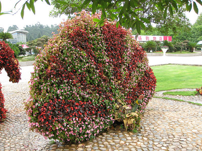 Expo Garden - peacock made of fresh begonias.