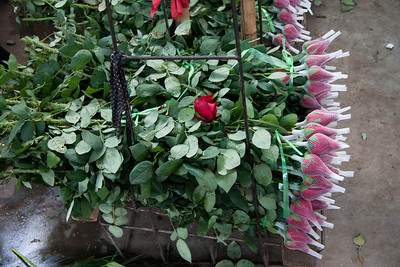 Red roses for sale.