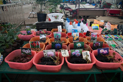 Various bulbs and rhizomes for sale.  Unfortunately, I can't take these into the U.S.