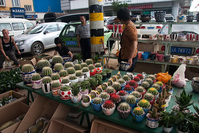 Cacti table at the outdoor flower market.