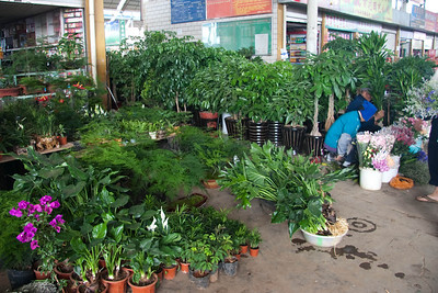 More plants for sale at the outdoor flower market.