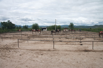 Busy day at the horse-back riding farm.  Most horses are out riding.