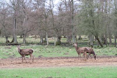 "Jaegerborg Dyrehave ""Deer Park"""