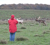 My wife keeping an eye on the stags keeping an eye on the herd.