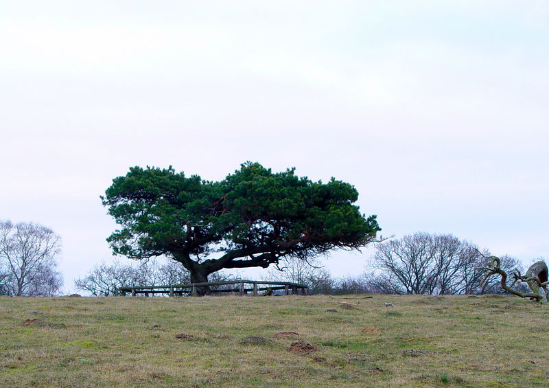 """The Tree of Life"" - A tree on top of a hill near where I live. (Sony F717)"