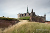 """Kronborg Castle with grasses and wildflowers, Helsingor, Denmark<br /> <br /> This is the castle that was the setting for Shakespeare's play 'Hamlet, Prince of Denmark'.  The castle dates back to a fortress, Krogen, built by King Eric VII in 1420, and would have been well known to Shakespeare, who wrote Hamlet around 1600.  The castle was strategically important since it occupies the narrowest point between Denmark and Sweden and controlled the entrance to the Baltic Sea from 1429 to 1857 with 1.8 million ships passing through the sound and paying a toll to the castle during this time period.  In Hamlet the town of Helsingor becomes Elsinore.<br /> <br /> King Frederick II converted the medieval fortress to a magnificent castle between 1574 and 1585, a few years before Shakespeare wrote Hamlet. The play has been performed many times in the castle, with famous actors such as Lawrence Olivier, John Gielgud and Christopher Plummer.  The castle is a UNESCO heritage site.<br /> <br /> Other photos of Kronborg Castle, a beautiful ship's figurehead in its museum and the famous chapel can be seen here: <a href=""""http://goo.gl/RBL9fm"""">http://goo.gl/RBL9fm</a><br /> <br /> 2/05/14  <a href=""""http://www.allenfotowild.com"""">http://www.allenfotowild.com</a>"""
