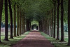 """Tunnel of trees, Fredensborg Palace garden, Denmark<br /> <br /> This amazing long tunnel of large trees was growing in the famous garden of the palace.  The composition is an example of how breaking the rule of thirds can sometimes work.<br /> <br /> Some interesting photos of the ships in the Viking museum can be seen here: <a href=""""http://goo.gl/Xt9Wzx"""">http://goo.gl/Xt9Wzx</a><br /> <br /> 3/04/14  <a href=""""http://www.allenfotowild.com"""">http://www.allenfotowild.com</a>"""