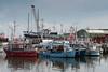 Busy boat harbour, Gilleleje, Denmark
